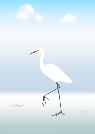 egret: Egret and fish Illustration