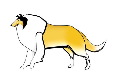 sable: Rough collie dog and the coat color sable and white Illustration