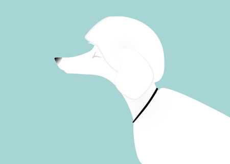 side view: Closing eyes, trimmed white poodle, side view. Illustration