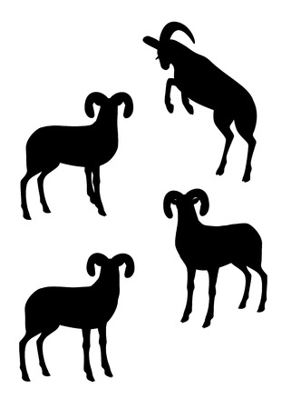 over the shoulder: Silhouette of big horn sheep Illustration