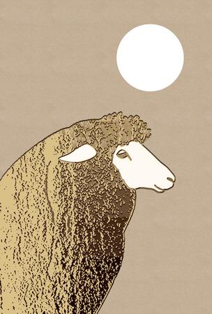 in profile: Profile of sheep