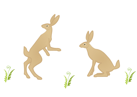 over the shoulder: Two hares sitting and standing to look over shoulder