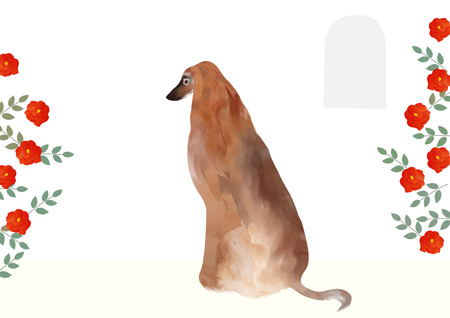 hound: Afghan hound and roses