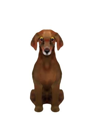 dachshund: Dachshund sitting