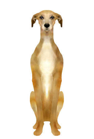 greyhound: Greyhound sitting