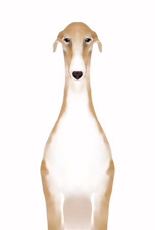 front view: Front view of greyhound Stock Photo