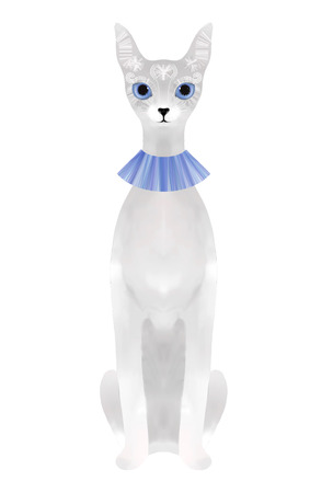 blue collar: Sitting silver cat in blue collar isolated on white