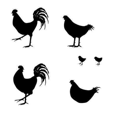 lenght: Silhouette of chickens
