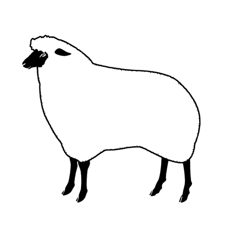 Black face sheep Stock Photo