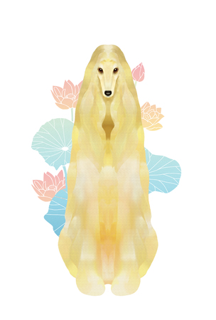 Afghan hound and lotus flowers Stock Photo