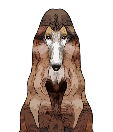 Face of dog, an afghan hound