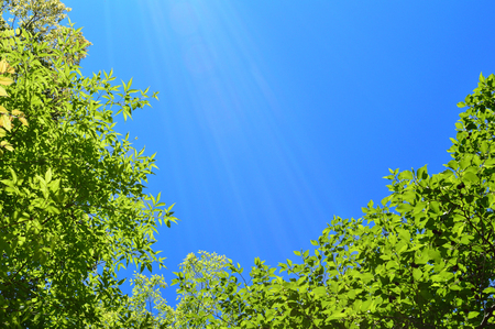 Blue Sky green growing leaves, spring sources of light