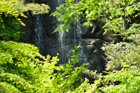 Water slipping off the rocks in the depths of the fresh green leaves lit by the early summer sunshine Banco de Imagens