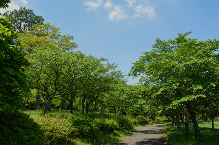 Sunny day of spring, the sky, the trees and the sunny walking path