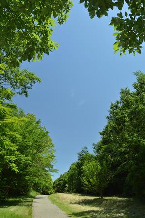Sunny Spring Park 写真素材 - 105814800