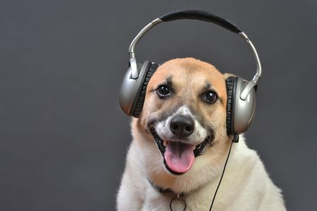Doghouse DJ 版權商用圖片