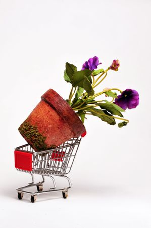 Giant flower in a cart Stock Photo - 4976118