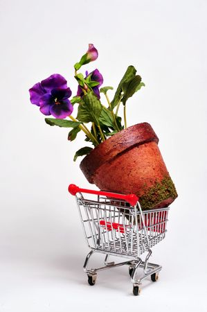 Giant flower in a cart Stock Photo - 4976122