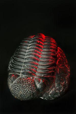 million fish: 300 million year old Trilobite.