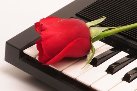 Red Rose Reklamní fotografie