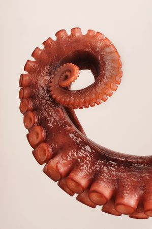 octopus: Octopus Tentacle Stock Photo