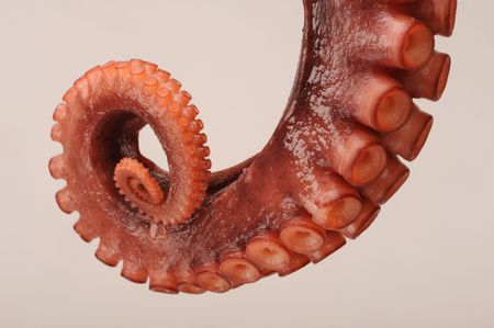 Octopus Tentacle Stock Photo