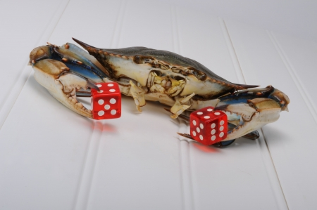 Blue Crab playing dice. photo