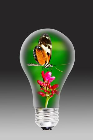 Light bulb and the butterflower. Stock Photo - 8080020