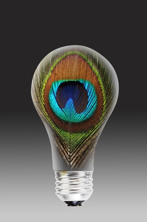 Peacock feather and light bulb.