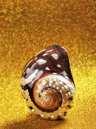 Nautilus Shell Stock Photo - 9345265