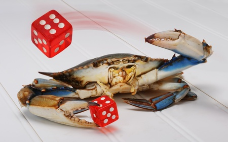 Blue Crab throwing Red Dice. Stock Photo - 9646398