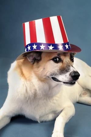 Uncle Sam Dog. Stock Photo - 10415414