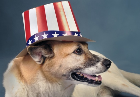 sam: Uncle Sam Dog. Stock Photo