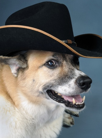 Cowboy Dog Stock Photo - 10415415
