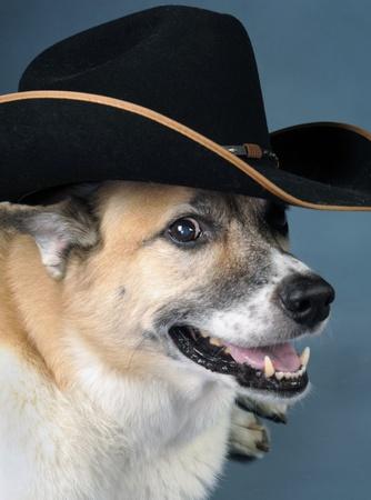 Cowboy Dog Stock Photo - 10415415
