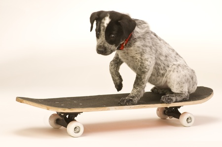 Hang Ten Little Doggy. Stock Photo - 11915674