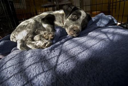 Adopt This Sad Little Puppy. Stock Photo - 11970301