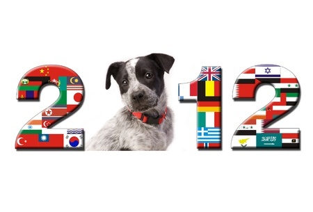 2012 New Year for Your Puppy and the World. photo