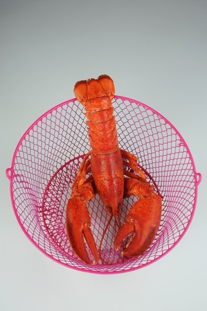 Lobster in a basket. photo