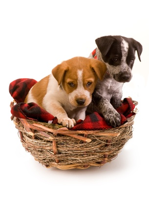 Two cute puppies in a birds nest  Stock Photo