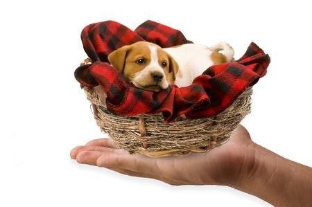 Puppies in a birds nest