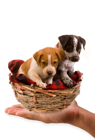 Puppies in a birds nest  photo