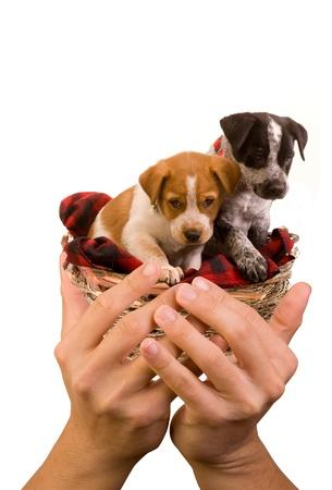 Puppies Stock Photo - 12757616