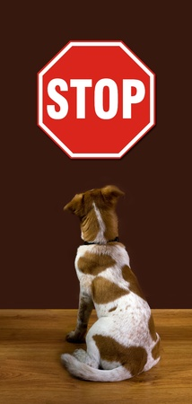 Stop Sign  Stock Photo - 12921314