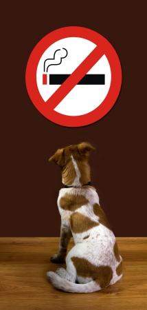 pet store advertising: No Smoking