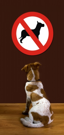 No Dogs Allowed Stock Photo - 12757612