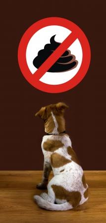 No Poop  写真素材