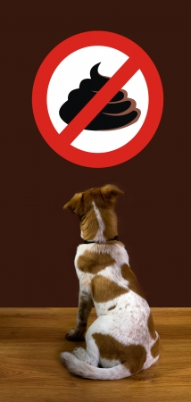 dog poop: No Poop  Stock Photo