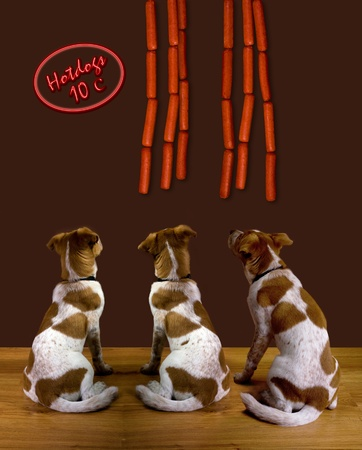 Dogs and Hot Dogs  photo
