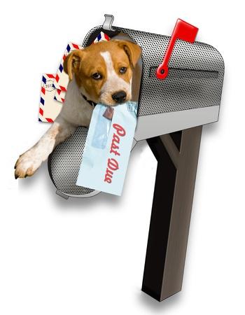 Puppy nella cassetta della posta